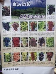 ブドウの種類.jpg